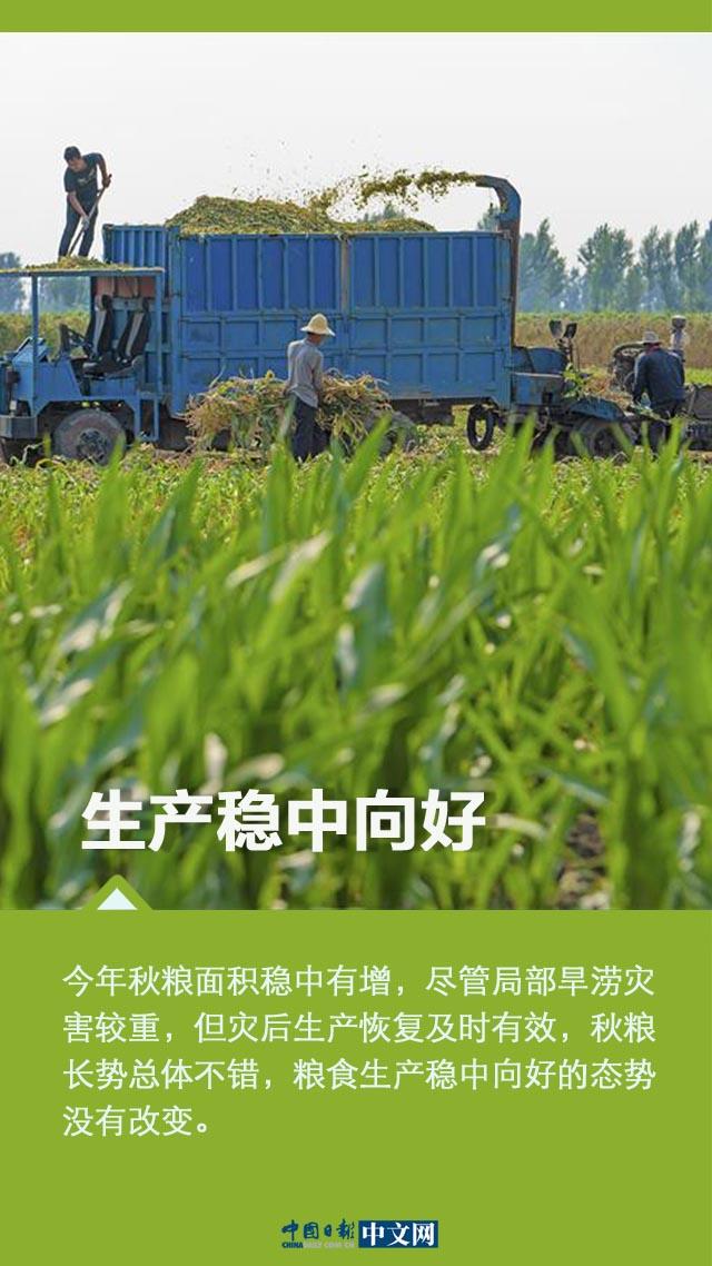 【图说中国经济】秋粮丰收在望 口粮绝对安全