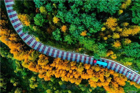 3巫溪七彩林景色。巫溪县文化旅游委供图 华龙网发