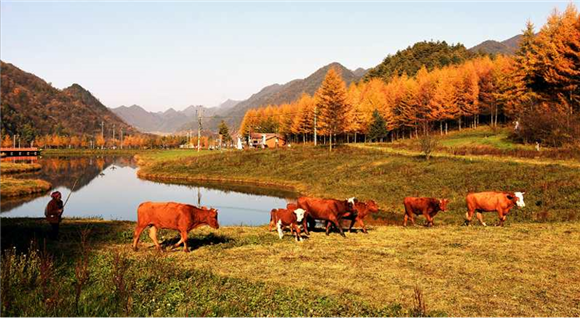 4巫溪红池坝秋景风光。巫溪县文化旅游委供图 华龙网发