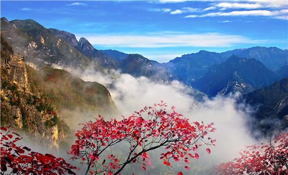 6兰英大峡谷层林尽染,红叶遍山。巫溪县文化旅游委供图 华龙网发