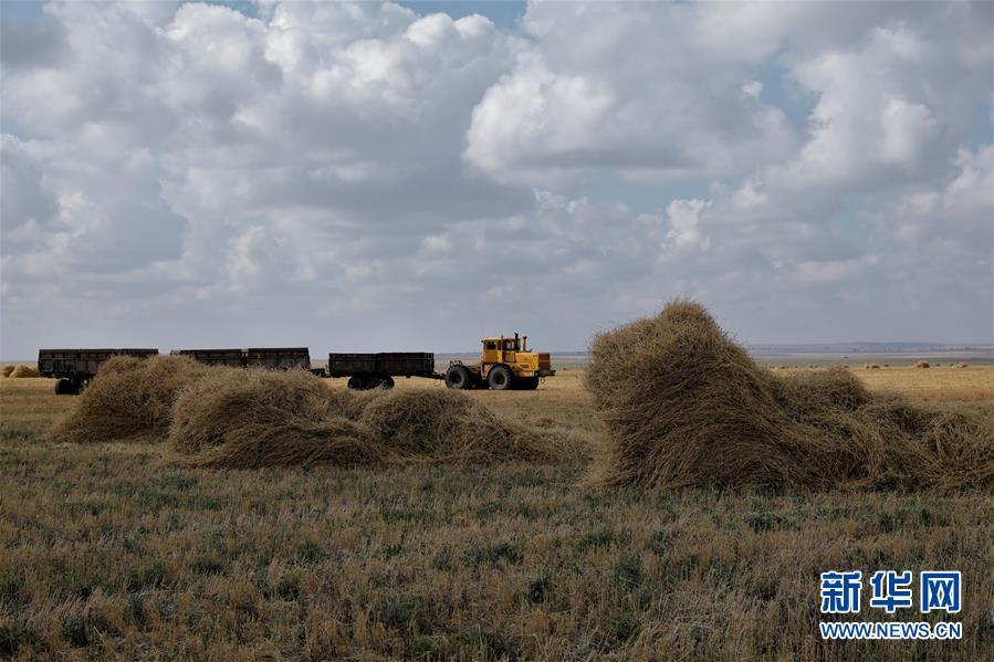 哈萨克斯坦扩大农产品生产和出口