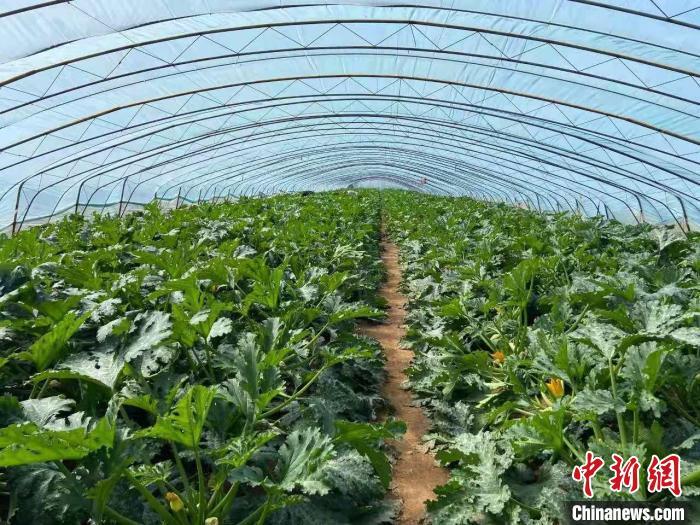 """山西长子:科技促农稳增收蔬菜大棚""""种出""""致富梦"""